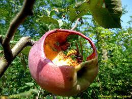 La mela e il #Grillo parlante. Storia di un successo mai annunciato. by #Life.