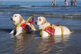 Dimostrazione con cani da salvataggio e intervento di primo soccorso