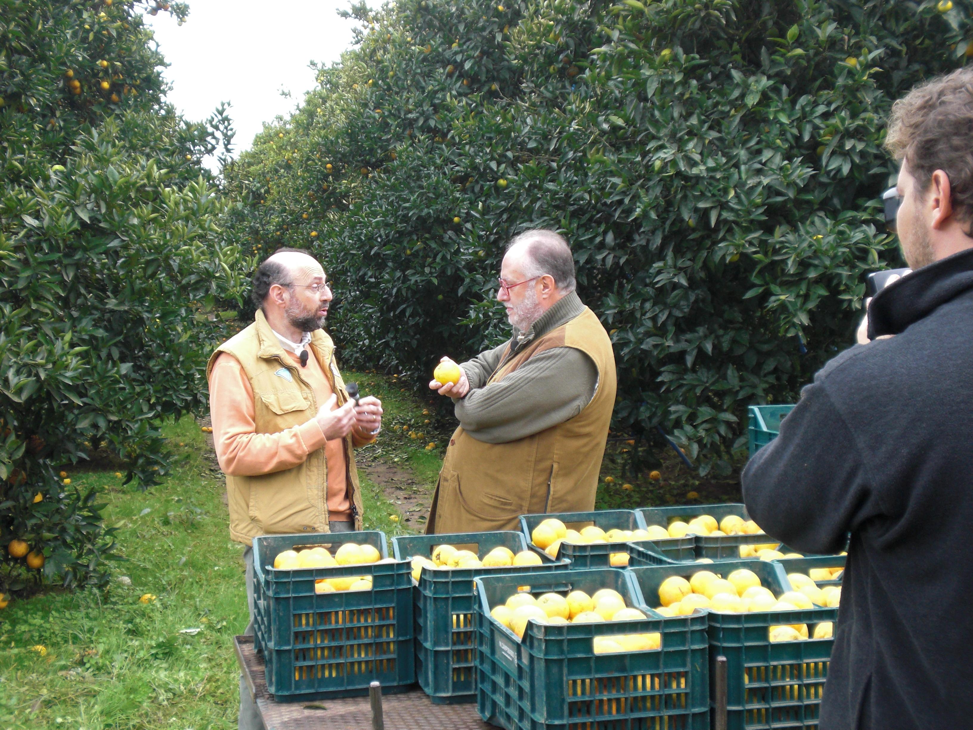 Gli agrumi di Palagiano in televisione su Canale 5