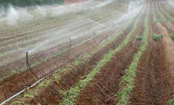 Acqua per l'agricoltura,  «Ora basta inefficienze e ritardi»