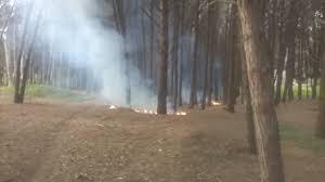 Incendio allapineta diPalagianello