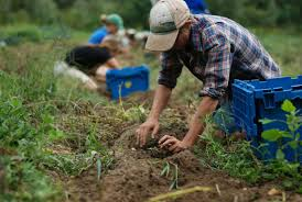 Borse di studio post laurea per figli di lavoratori agricoli e di datori di lavoro