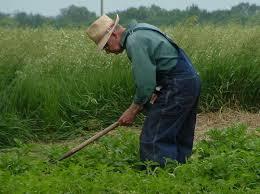Coronavirus, il danno e la beffa: tanti agricoltori multati ingiustamente