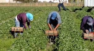 """Cia Puglia: """"Sia aumentata la dotazione per la cambiale agraria"""""""