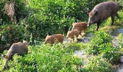 Puglia, la fauna selvatica conquista le campagne nel post-lockdown
