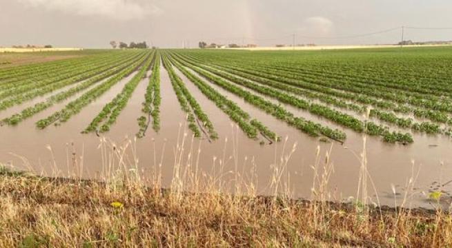 Maltempo, sale la conta dei danni per i nubifragi a Taranto e provincia. Grano appena seminato spazzato via da acqua e fango