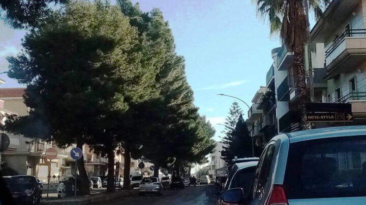 Lettera aperta all'Amministrazione Comunale per la tutela del Verde Urbano e la salvaguardia dei pini di Via per Torre S. Domenico