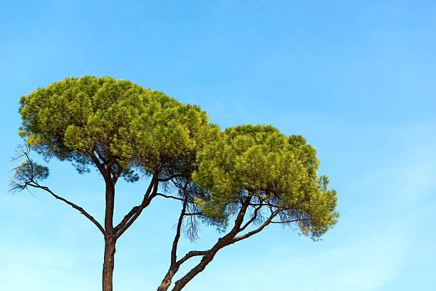 ArboriCultura urbana: alberi, città e buone pratiche